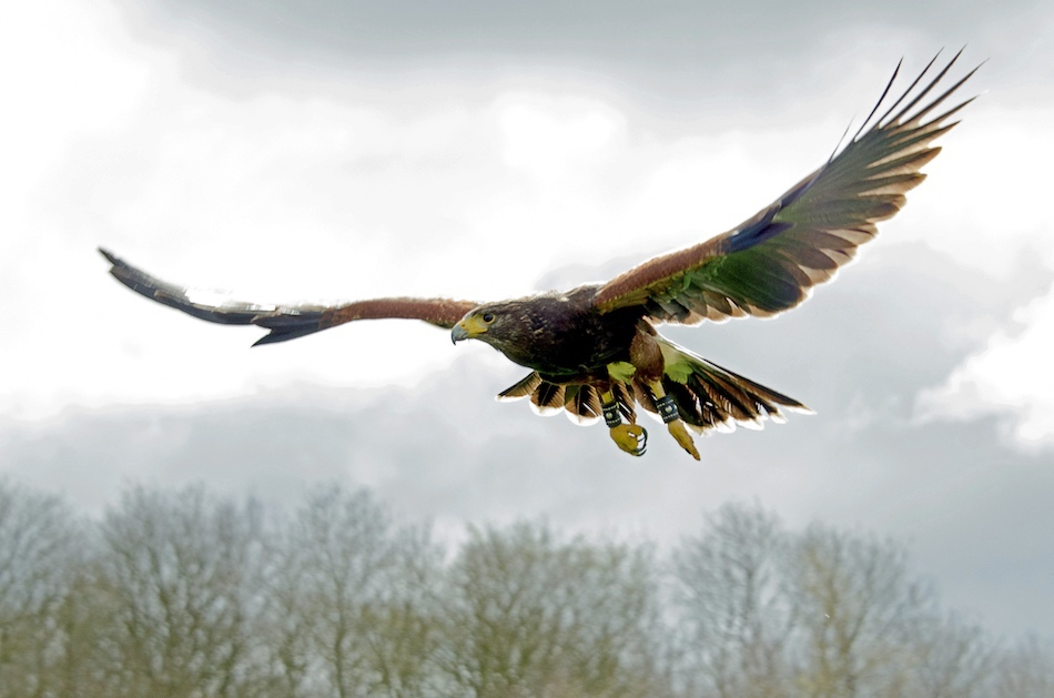 Elite Falconry Events