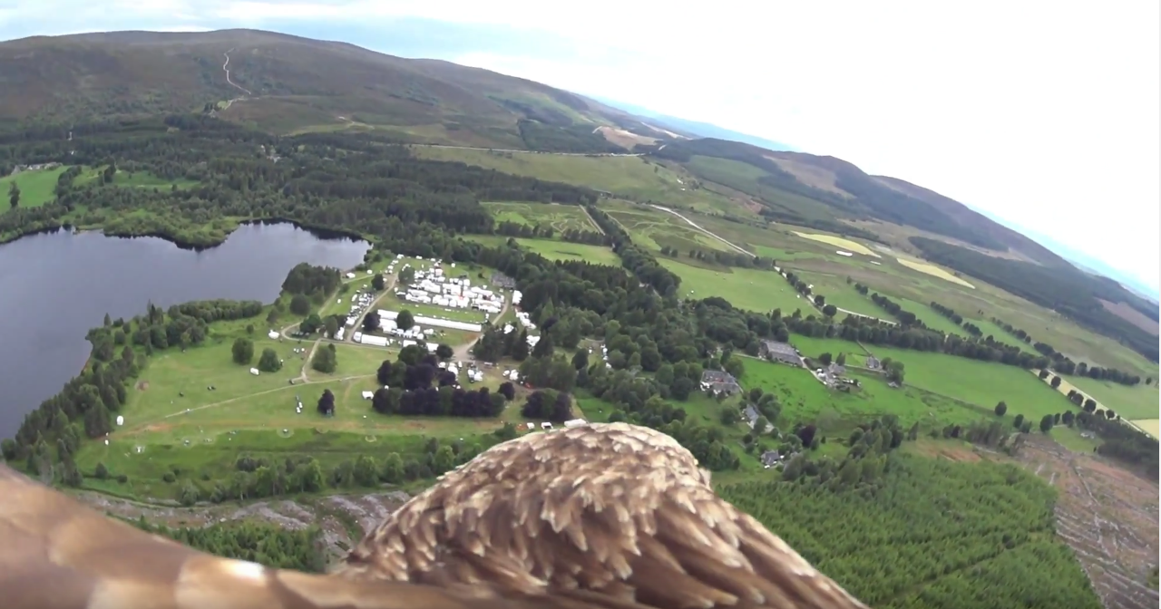 Flying Demonstrations - Elite Falconry