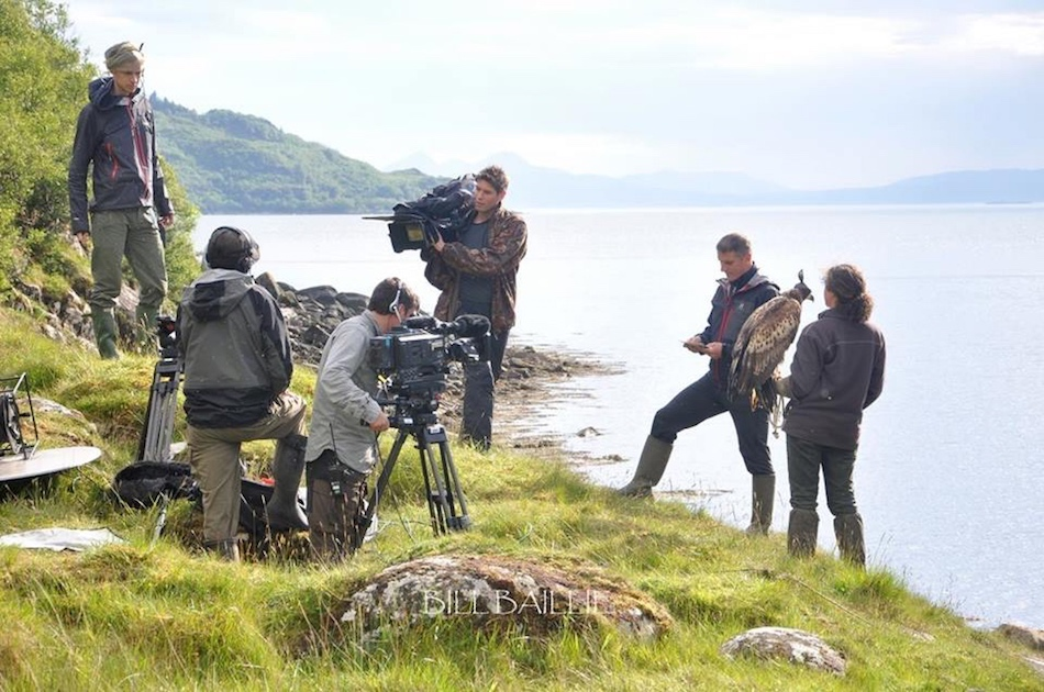 Film and Television Services - Elite Falconry