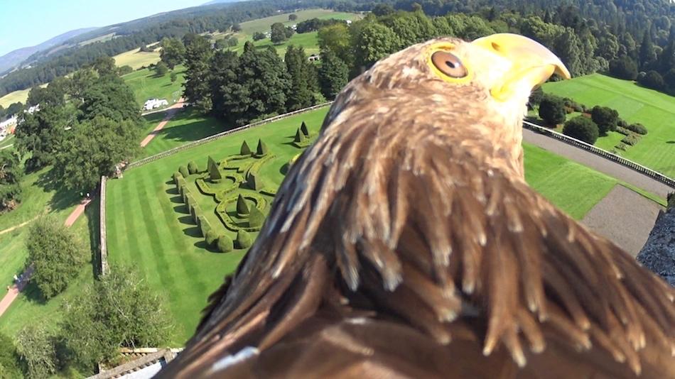 Elite Falconry - Fife Birds of Prey