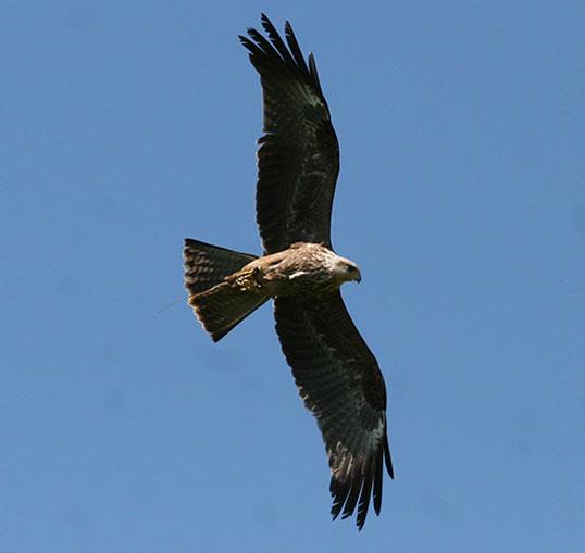 Eagle Day - Elite Falconry